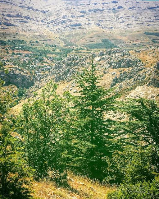 To sit in solitude, to think in solitude with only the music of the stream... (Cedar Reserve Tannourine)